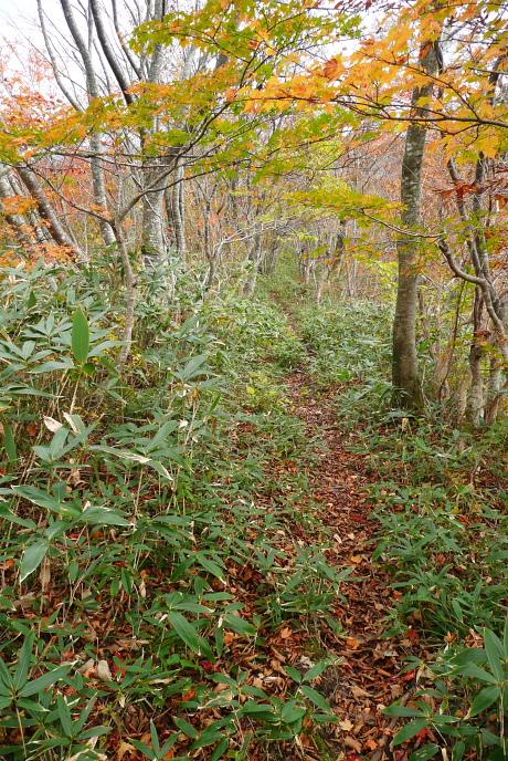 やわらかい雰囲気の森