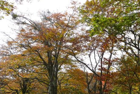 色づく道路わきの木々