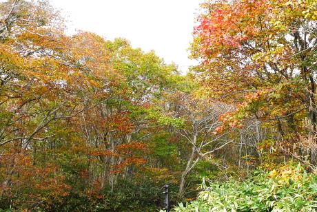ひときわ鮮やかな紅葉