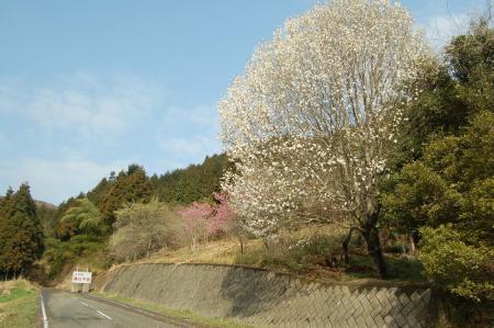 花咲く道2