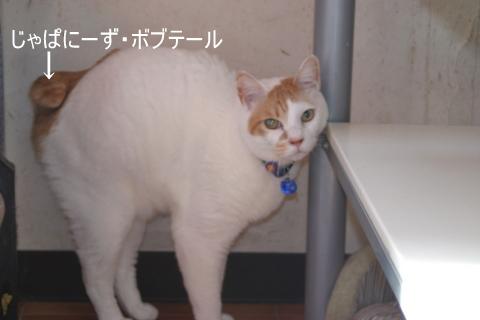 猫たち0063