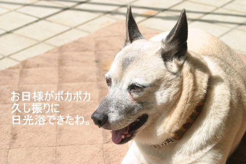 犬たち20034