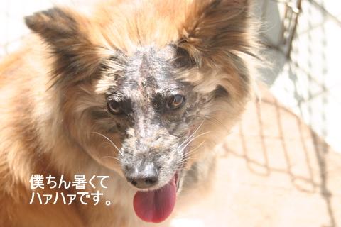 犬たち20058
