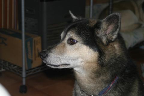 犬たち20051