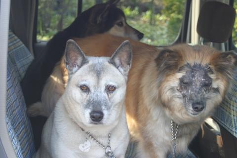 犬たち20064
