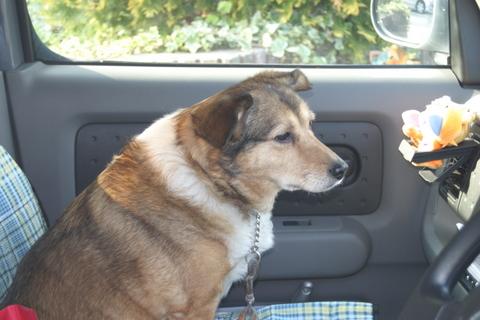 犬たち20063
