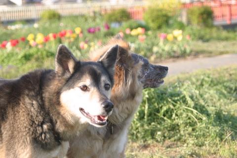 犬たち20072
