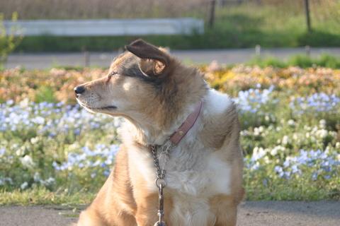 犬たち20073-1