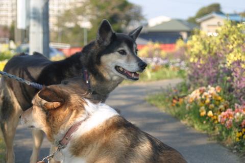 犬たち20067