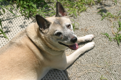 犬たち20081