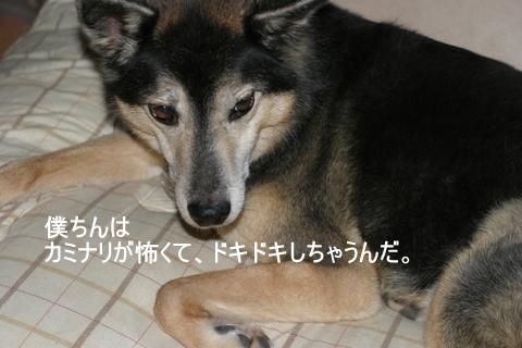犬たち20115