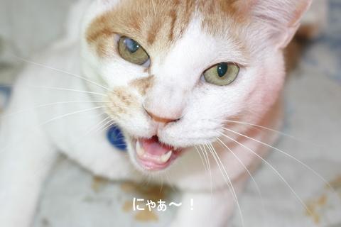 猫たち0084