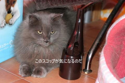 猫たち0095