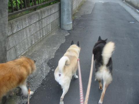 犬たち 30008
