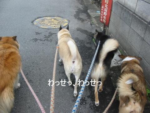 犬たち 30071