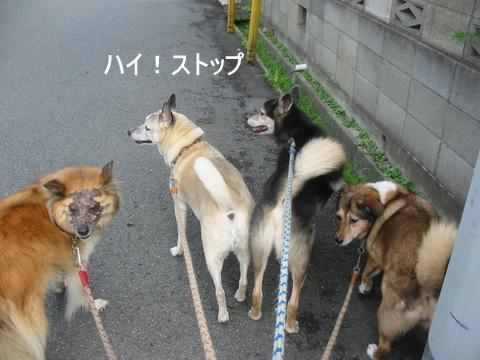 犬たち 30070