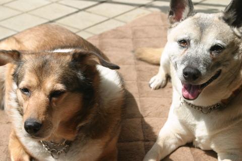 犬たち20039