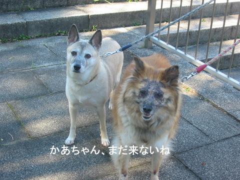 犬たち 30092
