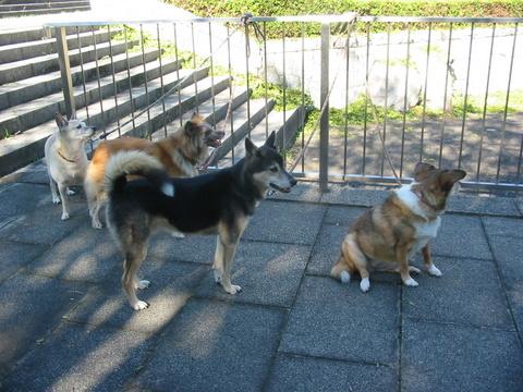 犬たち 30087