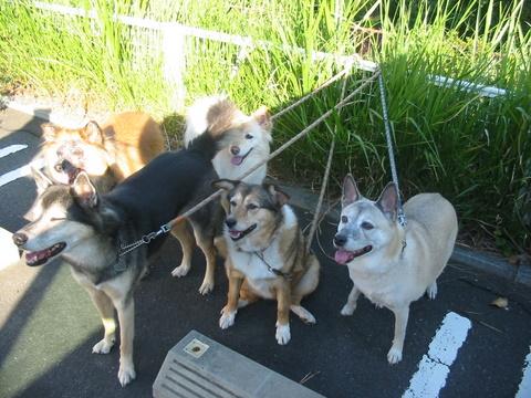 犬たち 30095
