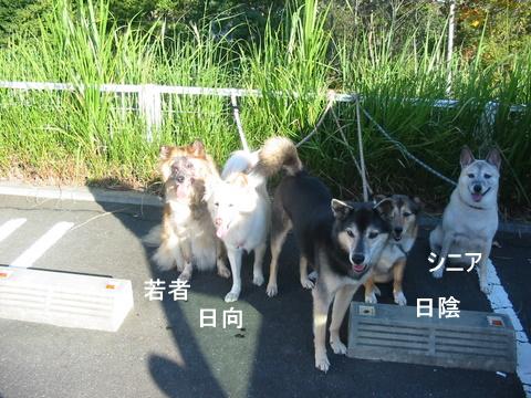犬たち 30099