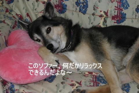 犬たち 30121