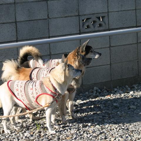 犬たち 30107
