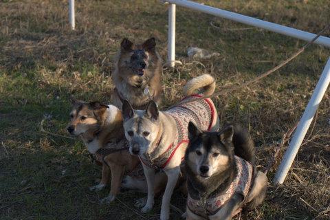 犬たち 30014-2