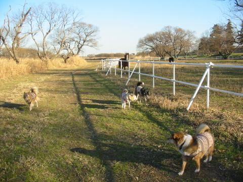 犬たち 30115