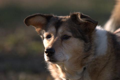 犬たち 30005-1