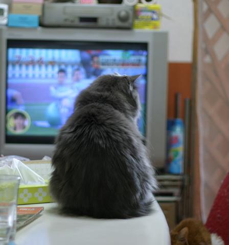 猫たち0109