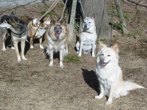 犬たち 30131
