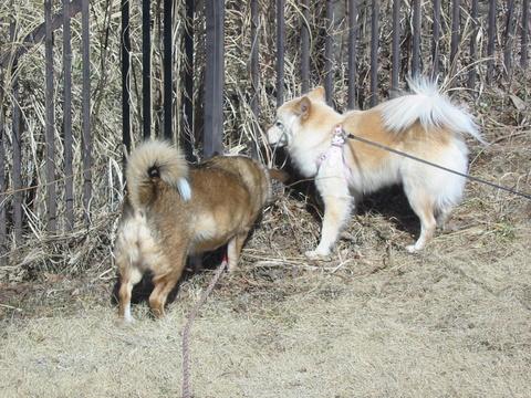 犬たち 30141