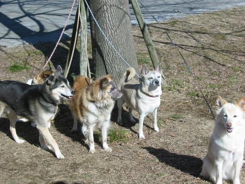 犬たち 30136