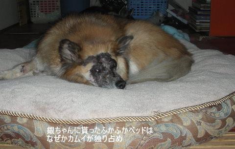 ニコン0046-1