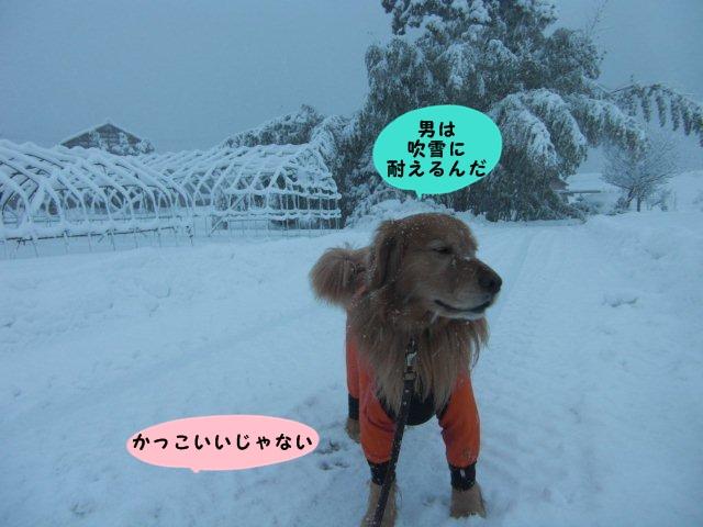 004_20130211202446.jpg