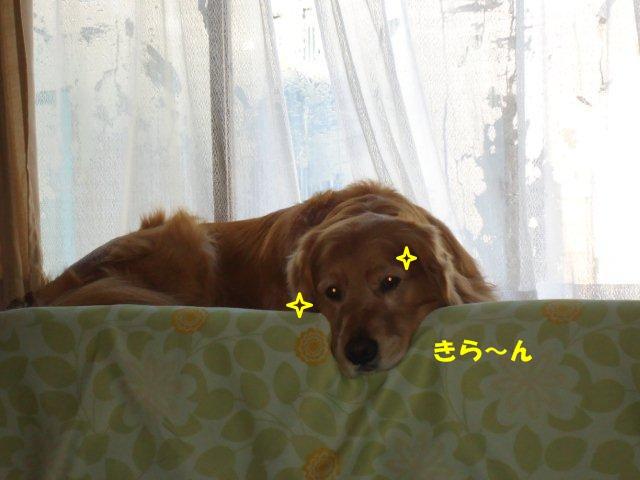 005_20130305075852.jpg