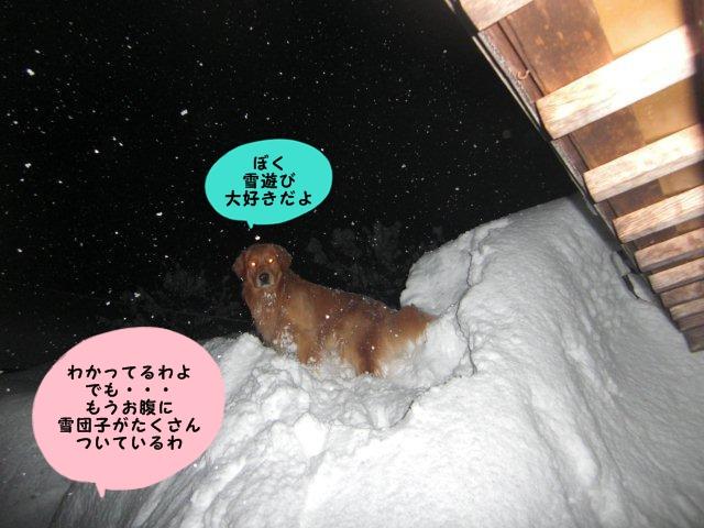006_20110131234705.jpg