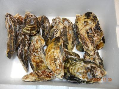 10年12月30日牡蠣