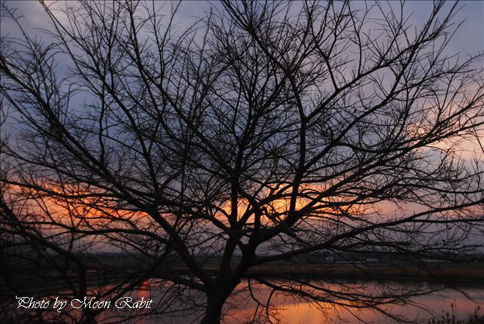 西条市の夕暮れ 乙女川付近の夕景色 愛媛県西条市禎瑞 2010年1月15日
