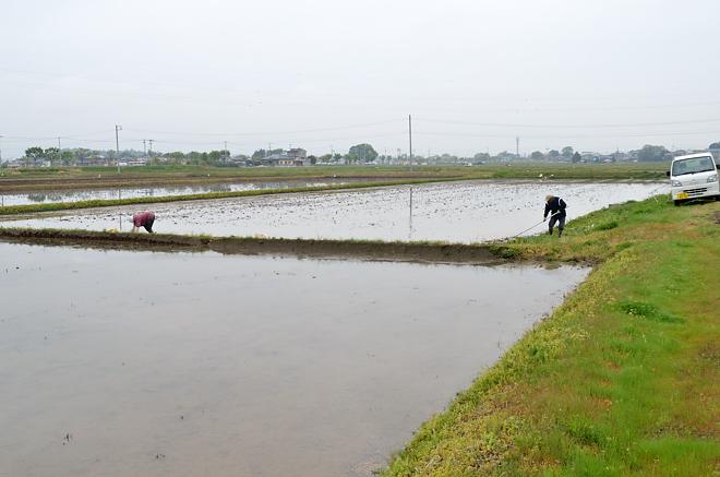 2011郡山の田植え