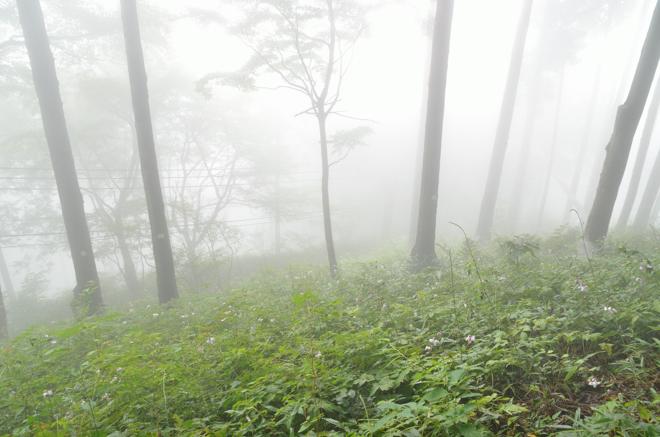 レンゲショウマ祭りは霧