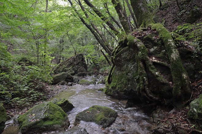 御岳山の渓流2