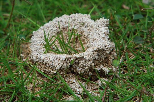 アリの巣(掘ってるね!)|西表島