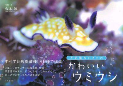 kawaii_umiushi1128.jpg