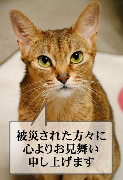 20110312_01.jpg