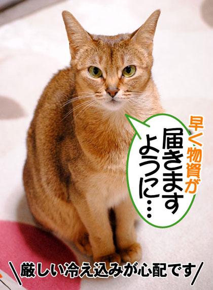 20110316_01.jpg