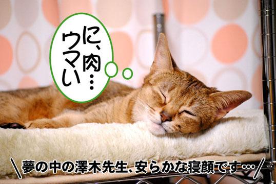 20110317_01.jpg