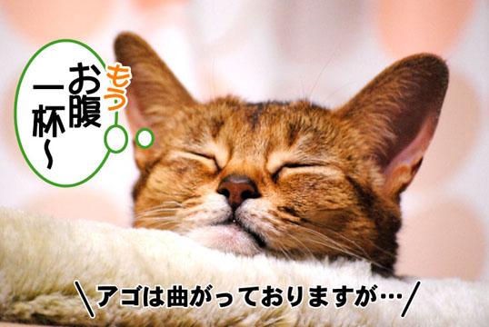 20110317_02.jpg