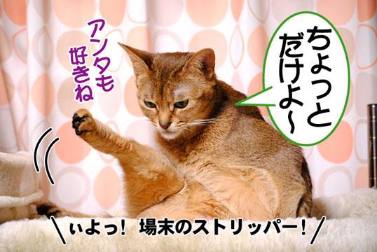 20110317_03.jpg